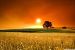 گالری تصاویر summer sunset 2 wallpaper 1280x800 259x174